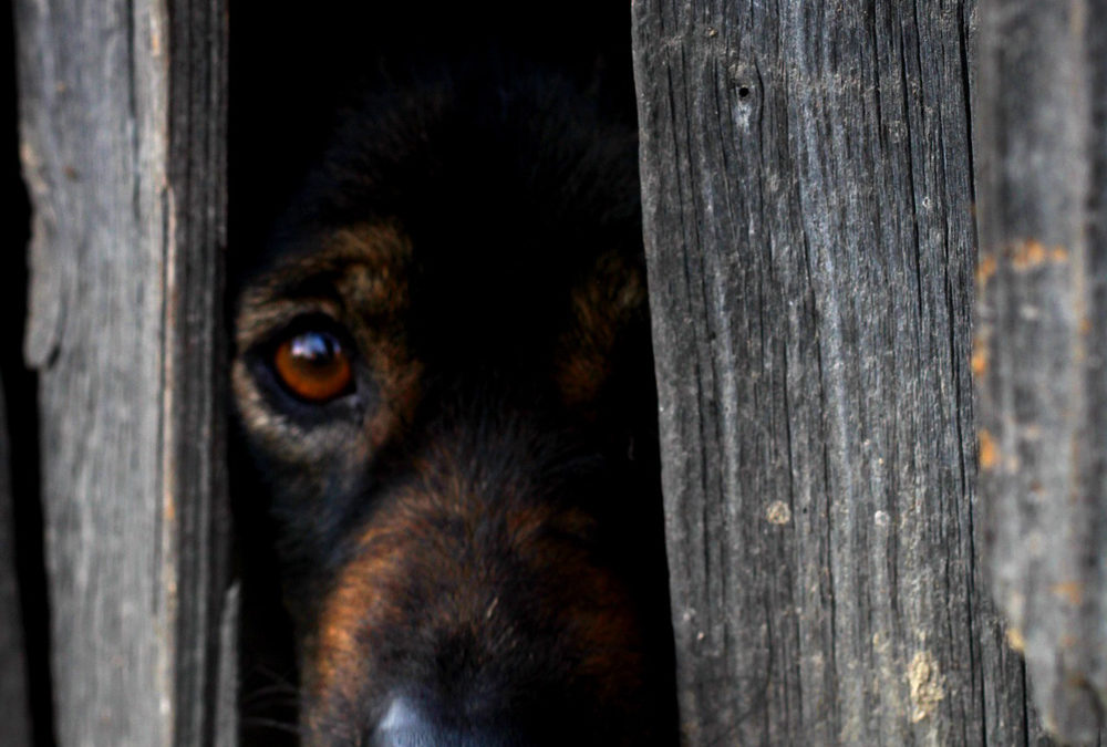 Points To Ponder About Separation Anxiety And Your Dog Dog Trainer